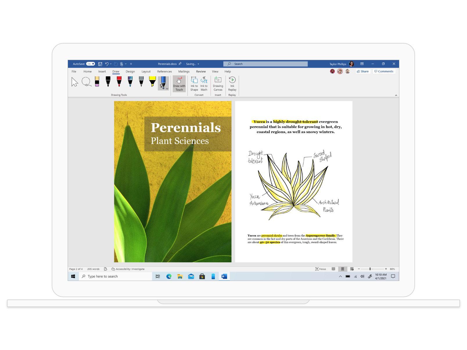 Document Word sur la science des plantes vivaces avec des schémas représentant des plantes.